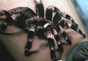 Spider Tattoo Ideas For Males