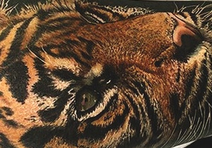 Tiger Tattoo Design Ideas For Men