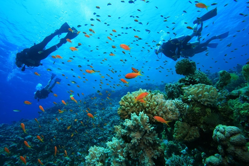 11 Top Places to Scuba Dive in America