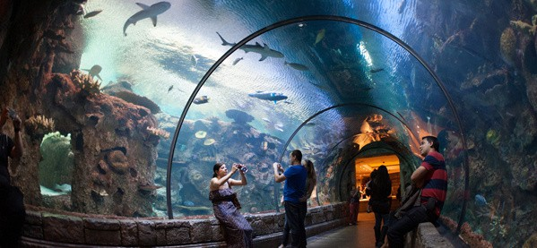 Vegas Shark Tank Reef