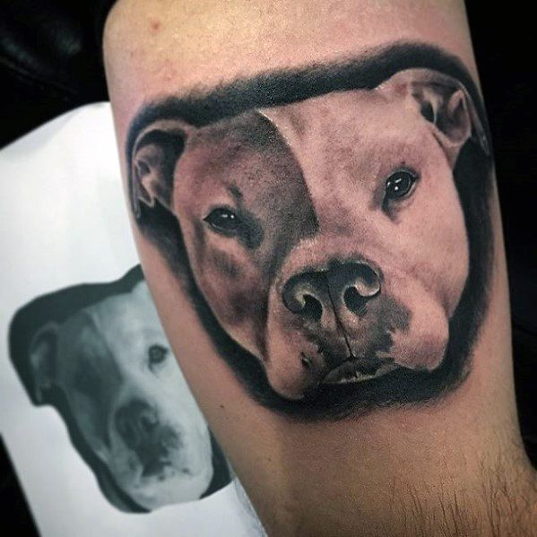 3d Pitbull Mens Tattoo Designs