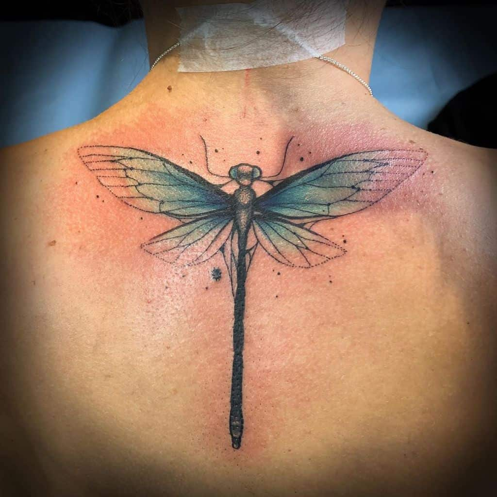 The young dragonfly transforming the ordinary meaning into self-transformation and intends deeper life meaning