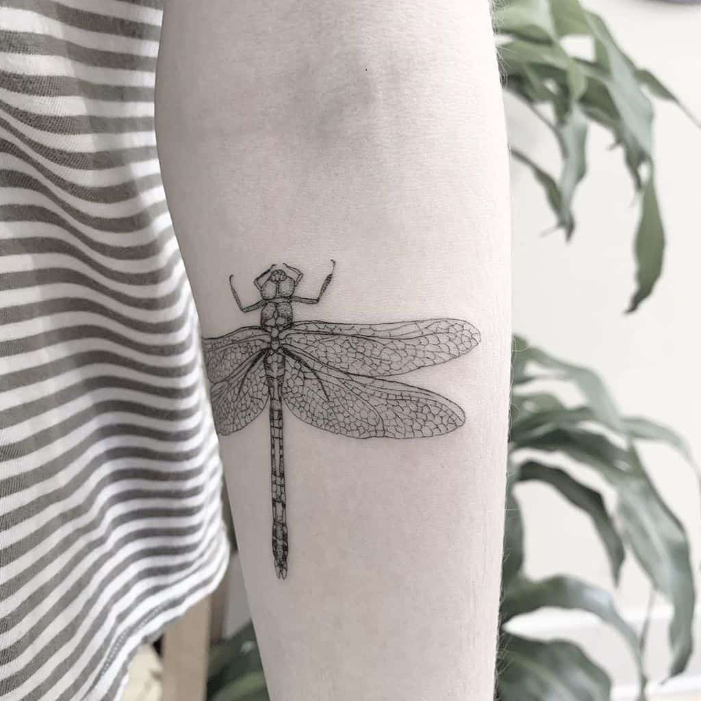 The well-defined details on the wings of a dragonfly in its black and white glory
