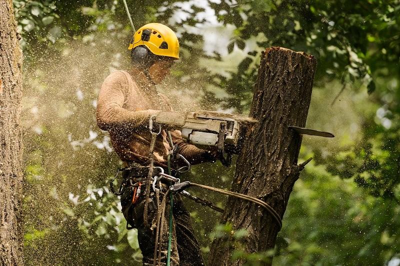 Arborist Climber - Best Outdoor Jobs For Outdoorsmen