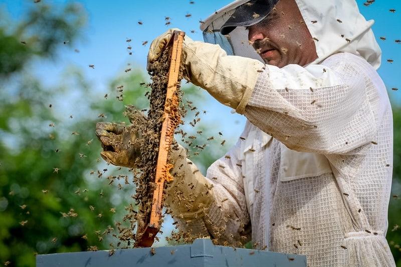 Beekeeper - Best Outdoor Jobs For Outdoorsmen