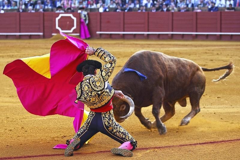Stierkampf-gefährlicher-Sport-in-der-Welt