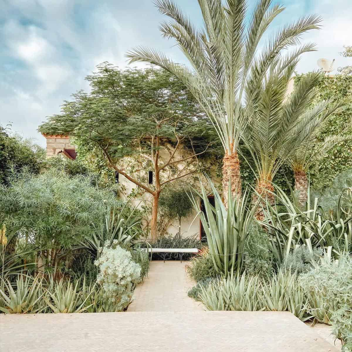 Cactus Garden Grass Free Yard Ideas -wellnessriadnahla