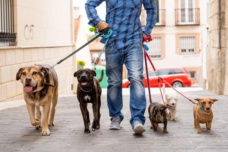 Dog Walker - Best Outdoor Jobs For Outdoorsmen