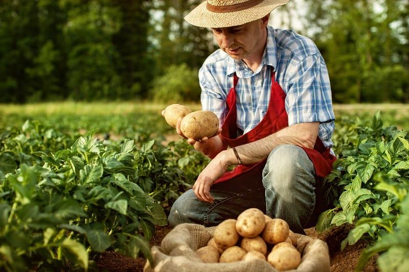 Farmer - Best Outdoor Jobs For Outdoorsmen
