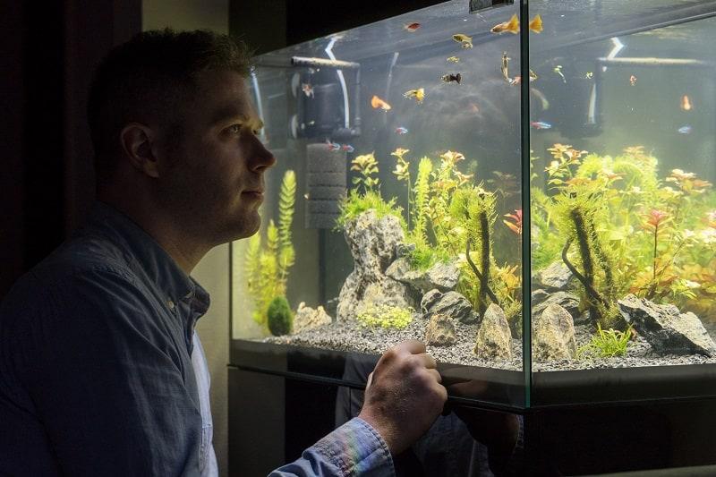 Fishkeeping-Hobbies-For-Men