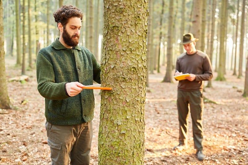 Forester - Best Outdoor Jobs For Outdoorsmen