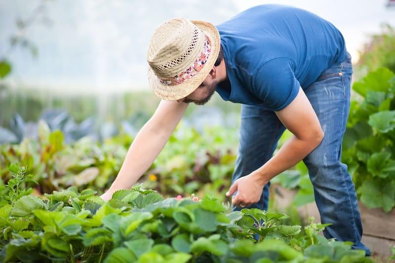 Gardening-Hobbies-For-Men