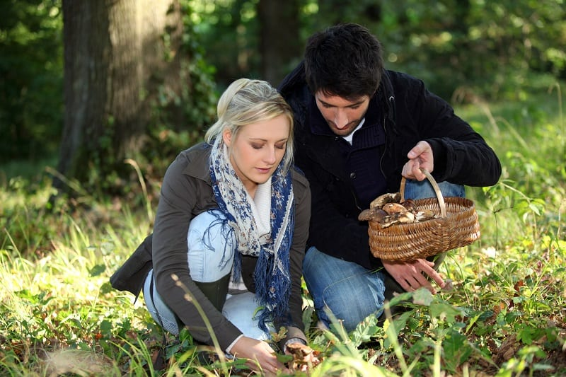 Go-Foraging-for-Mushrooms-To-Keep-The-Romance-Alive