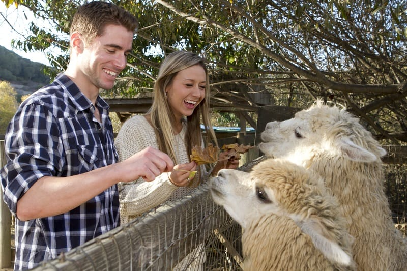 A,Young,Couple,On,A,Date,At,A,Petting,Zoo.