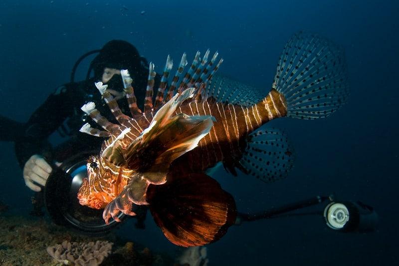 Marine Biologist - Outdoor Jobs For Outdoorsmen