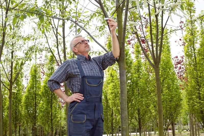 Nursery Manager - Best Outdoor Jobs For Outdoorsmen