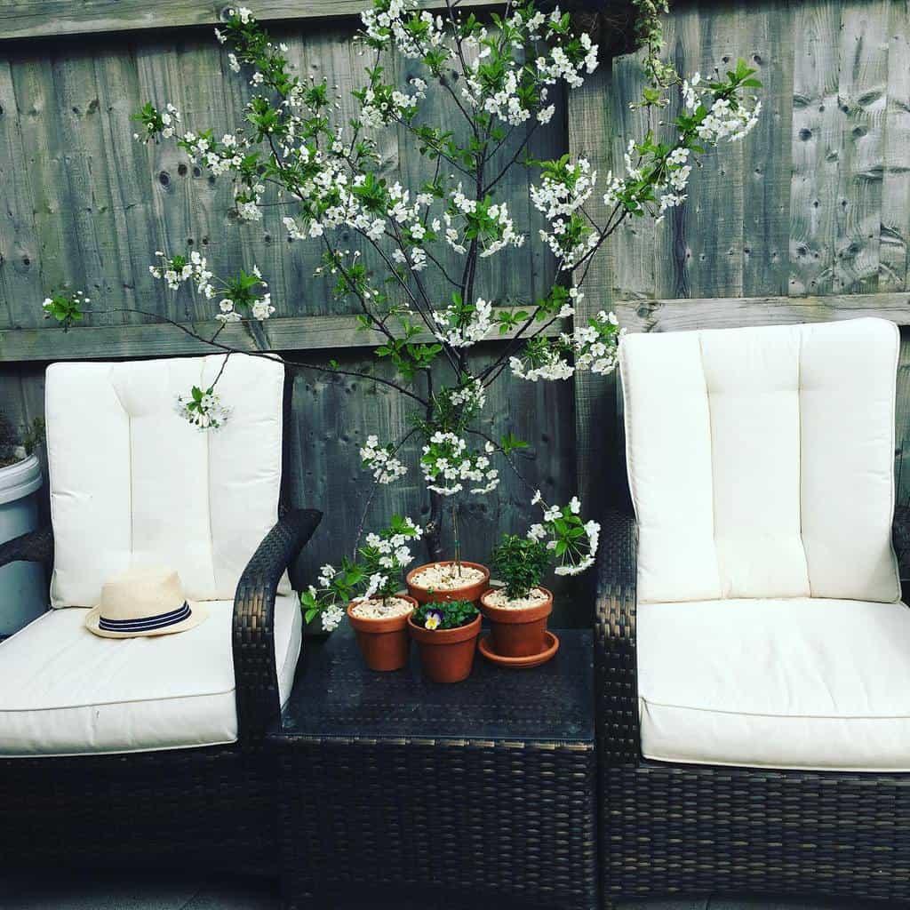 Plants Patio Garden Ideas -joyinthegarden76