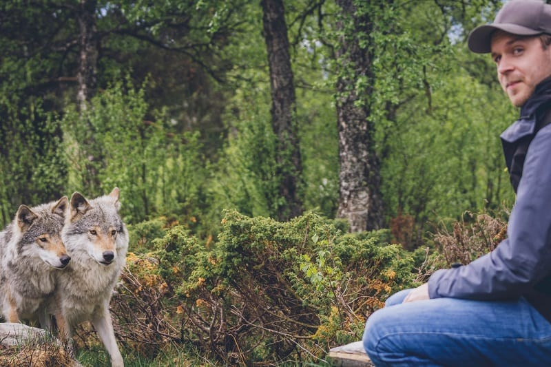 Protection-From-Animals-Tactics-And-Techniques-To-Master-Wilderness-Survival