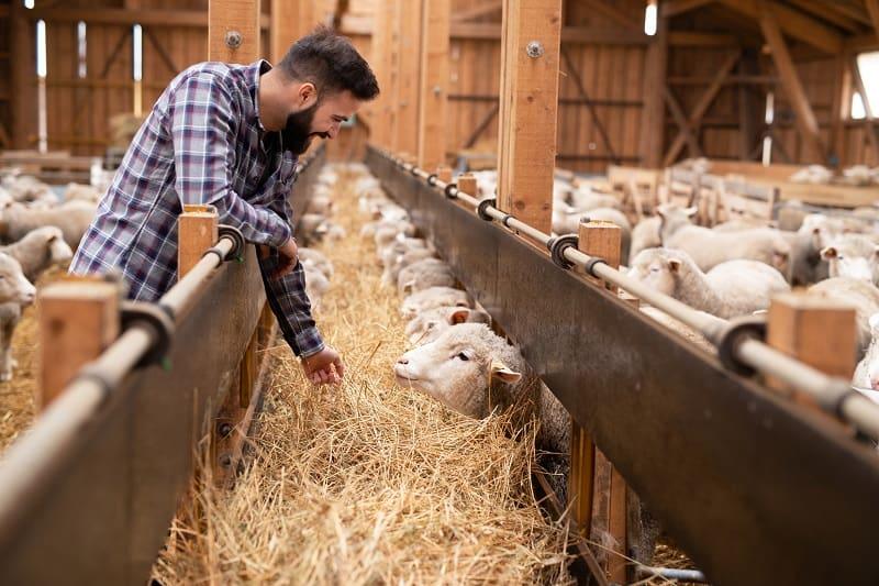 Rancher - Outdoor Jobs For Outdoorsmen