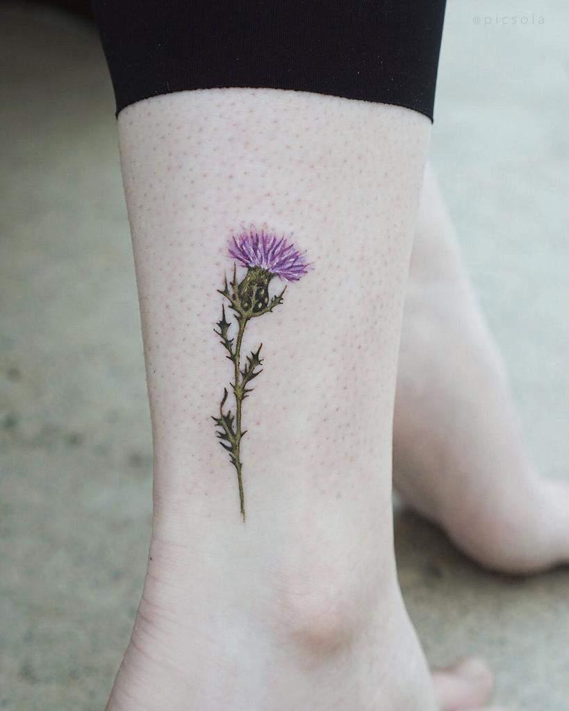 Scottish Thistle Tattoo Picsola