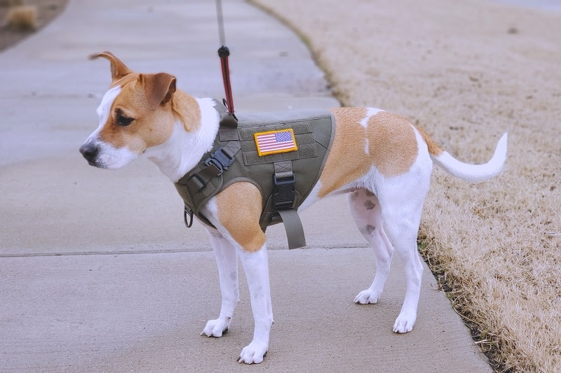 Top 13 Best Tactical Dog Harnesses – Modular Molle Canine Vests