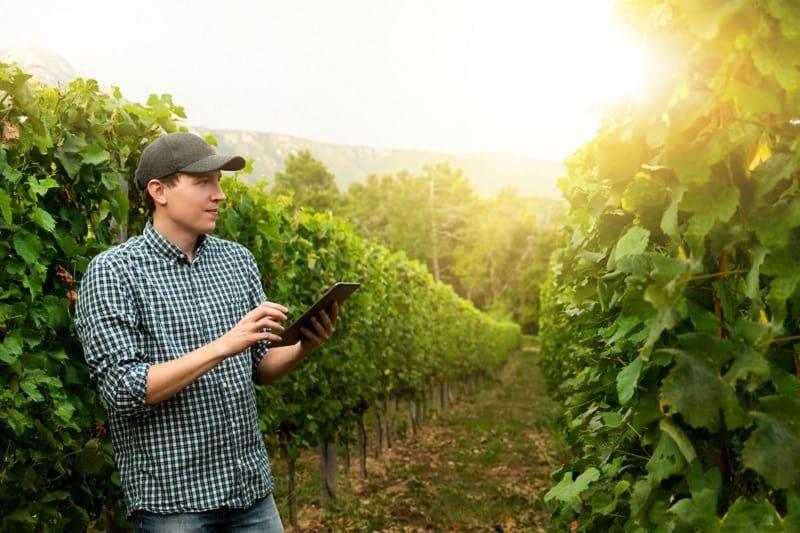 Vineyard Manager - Outdoor Jobs For Outdoorsmen