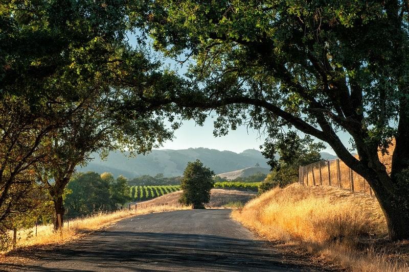 Wine-Country-California