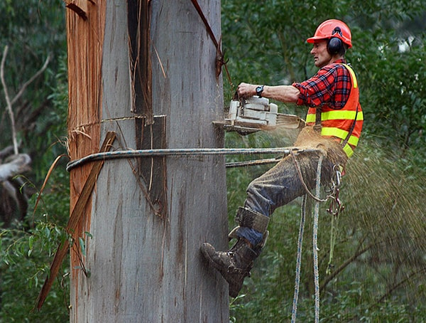 Arborist Climber Jobs That Are Outdoors