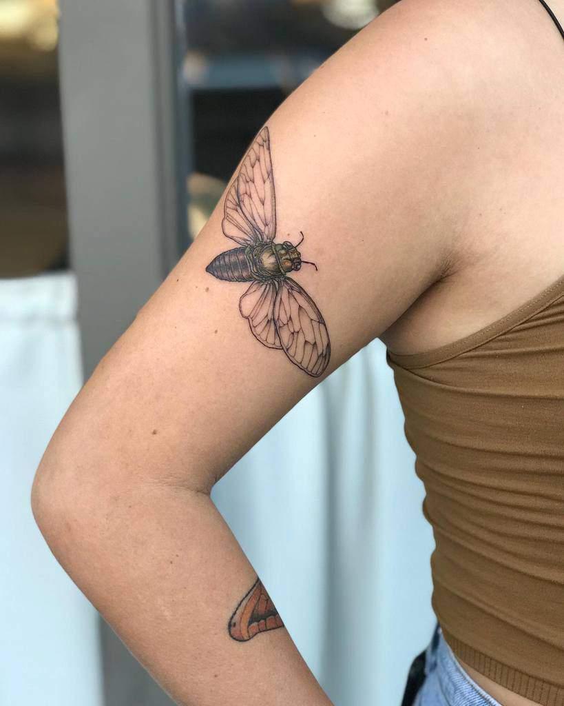 arm Cicada Tattoos emilypaxtattoo