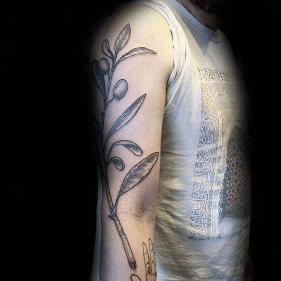 Arm Olive Branch Tattoos For Males