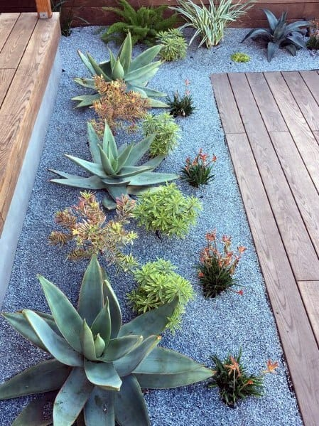 top 70 best desert landscaping ideas