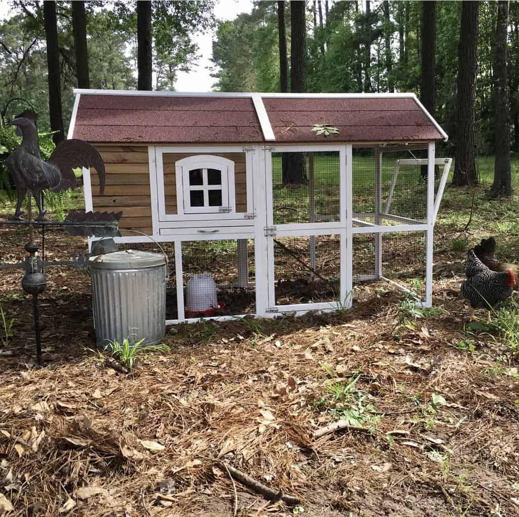 backyard chicken coop ideas homeonmagnoliahill