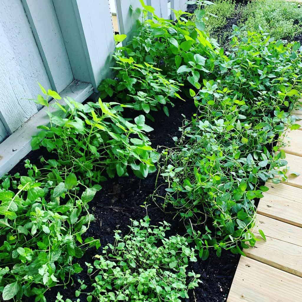 backyard herb garden ideas calicold