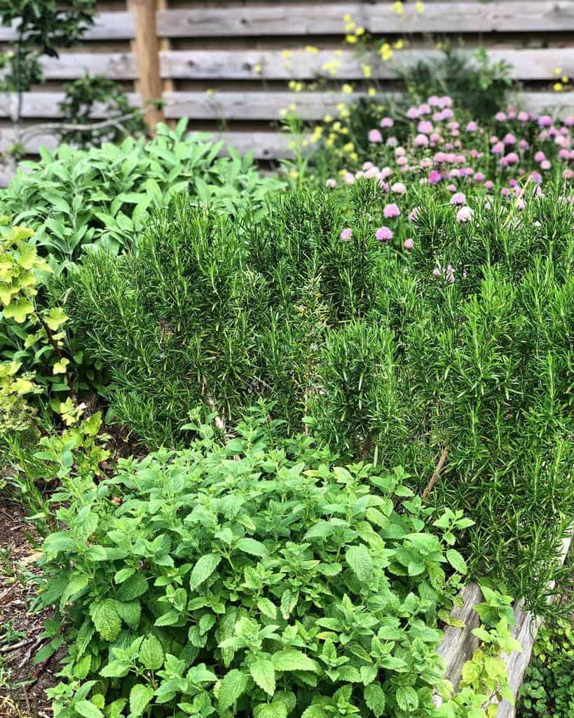 backyard herb garden ideas lavenders_on_my_mind