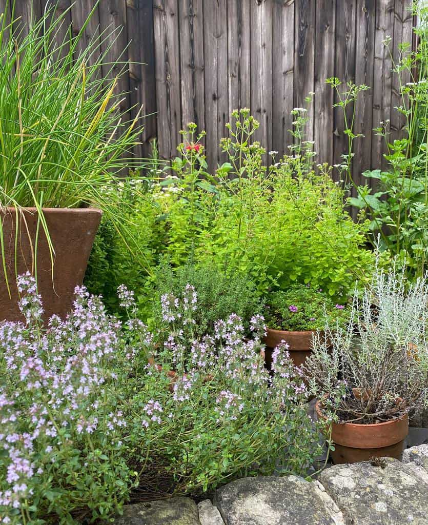 backyard herb garden ideas whatmaggiedidnext