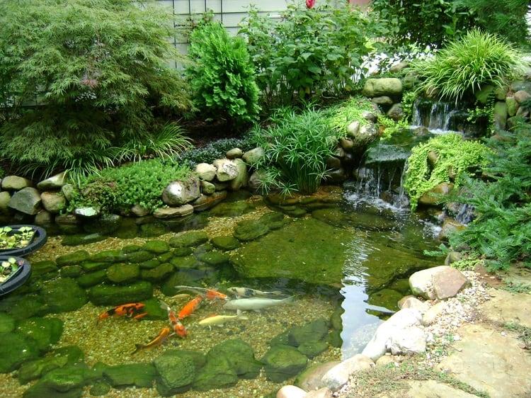 Backyard Koi Pond With Waterfalls