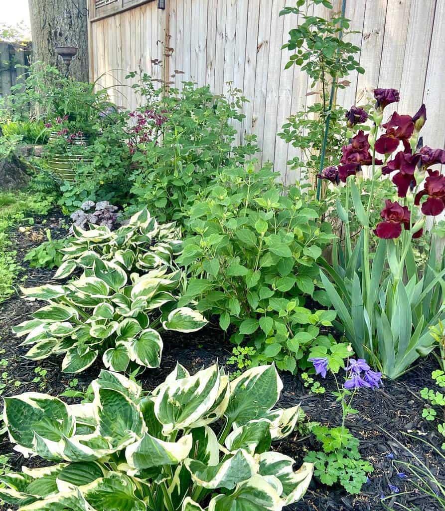 backyard shade garden ideas citygarden.ruralheart