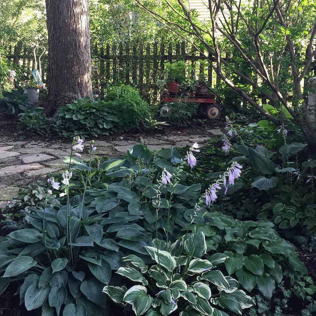 backyard shade garden ideas jeaninemanser