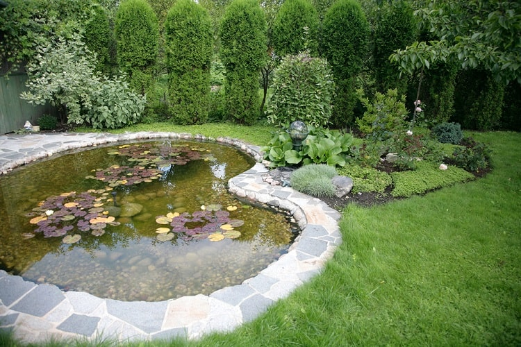 Backyard Small Shallow Pond With Waterlily