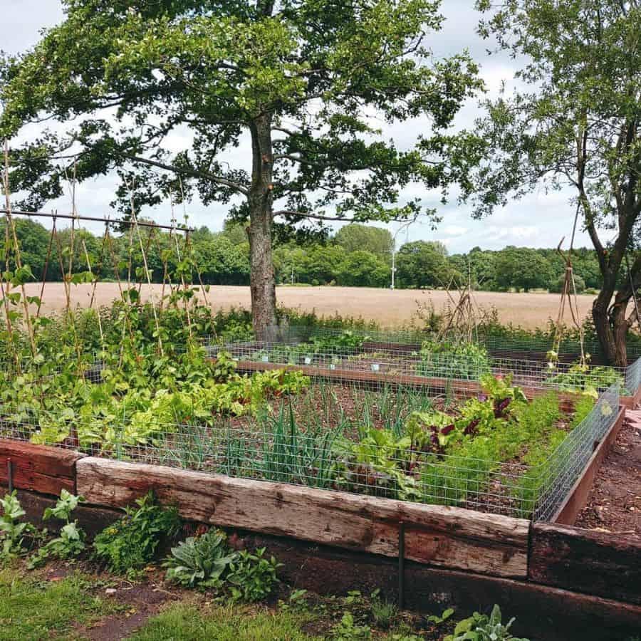 backyard vegetable garden ideas dorisbatty