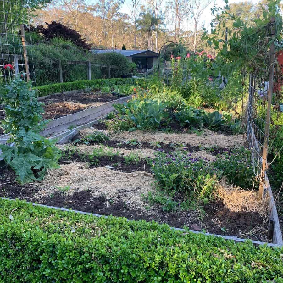 backyard vegetable garden ideas eatgrowlovemarlyse