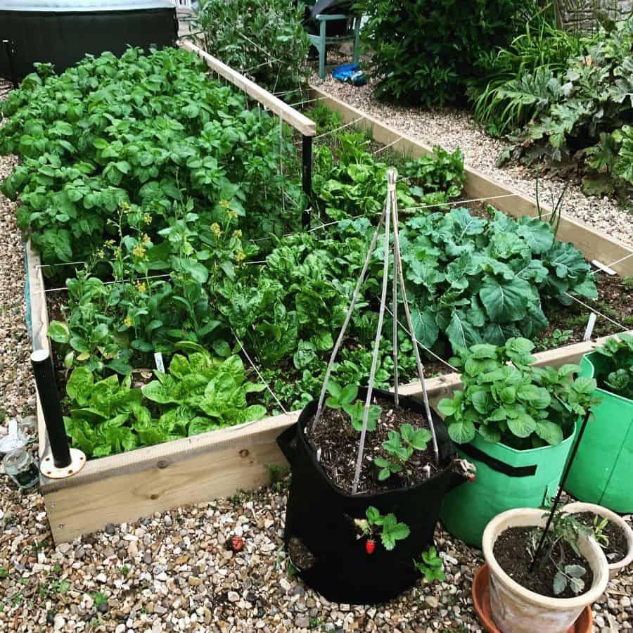 backyard vegetable garden ideas elainefrostwriter