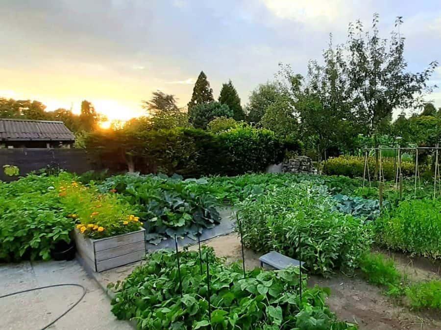 backyard vegetable garden ideas moestuin010