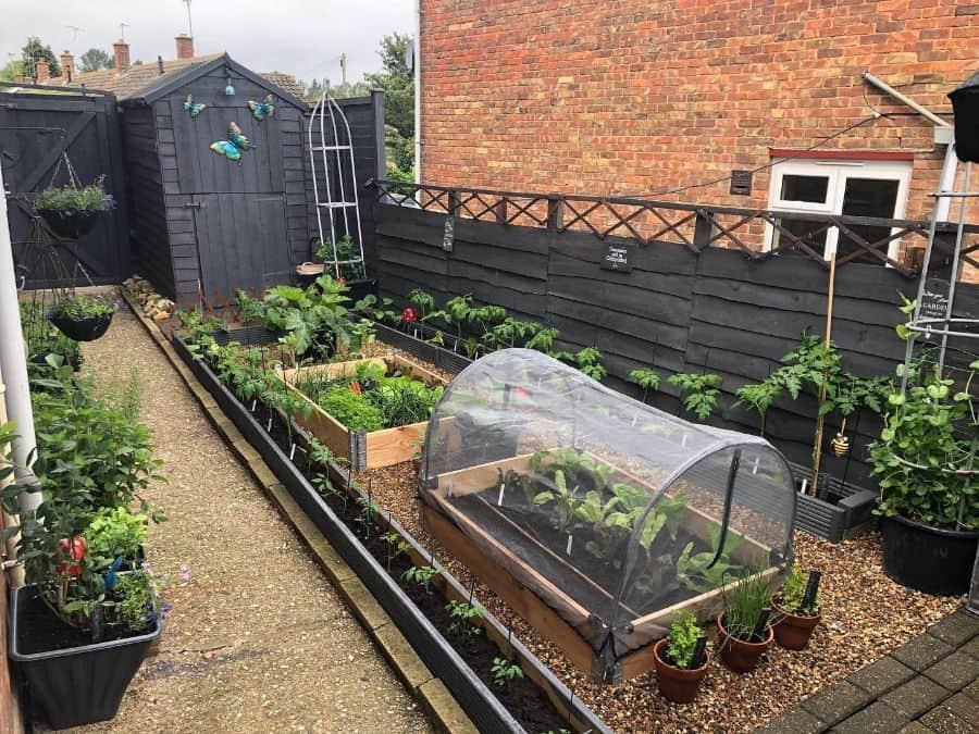 backyard vegetable garden ideas oxgreenfingersxo