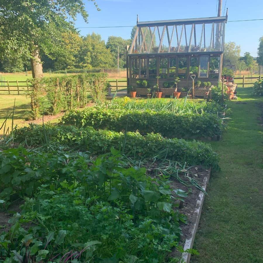 backyard vegetable garden ideas paige_87
