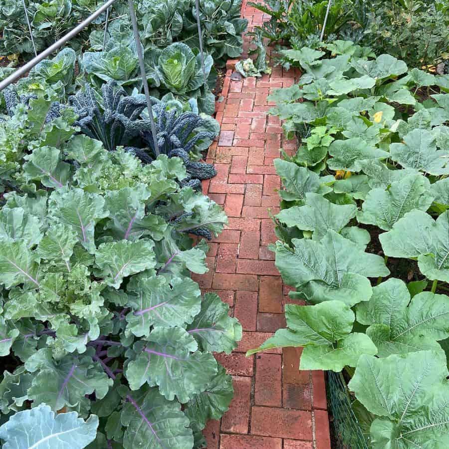 backyard vegetable garden ideas thisfunnyoldplace
