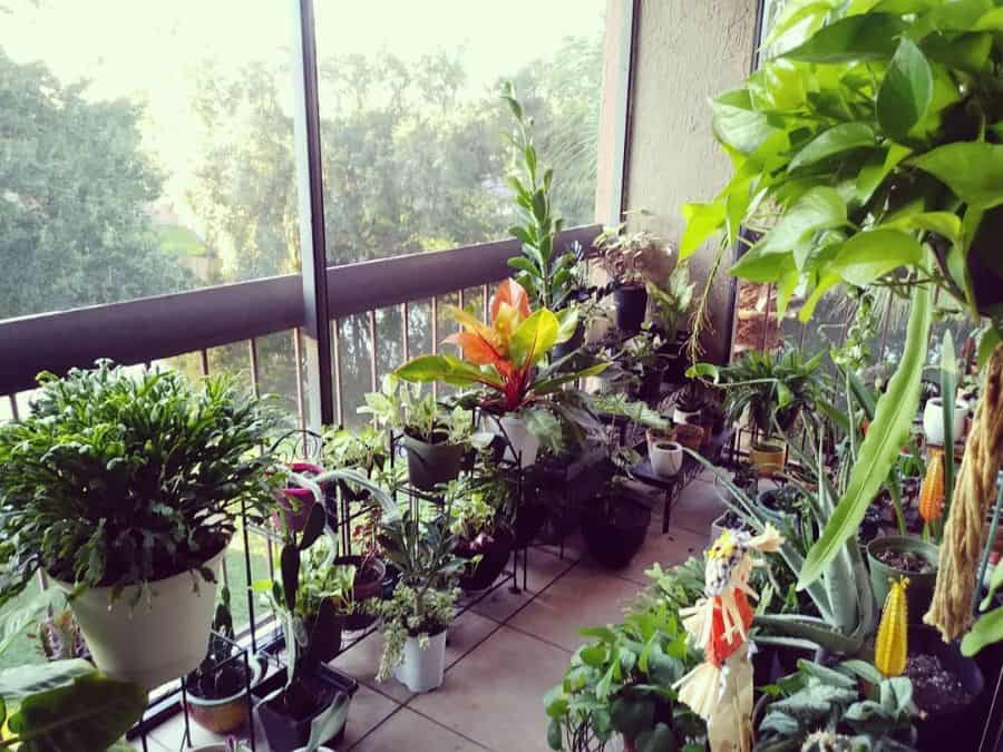 balcony or rooftop container garden ideas gathering_roots