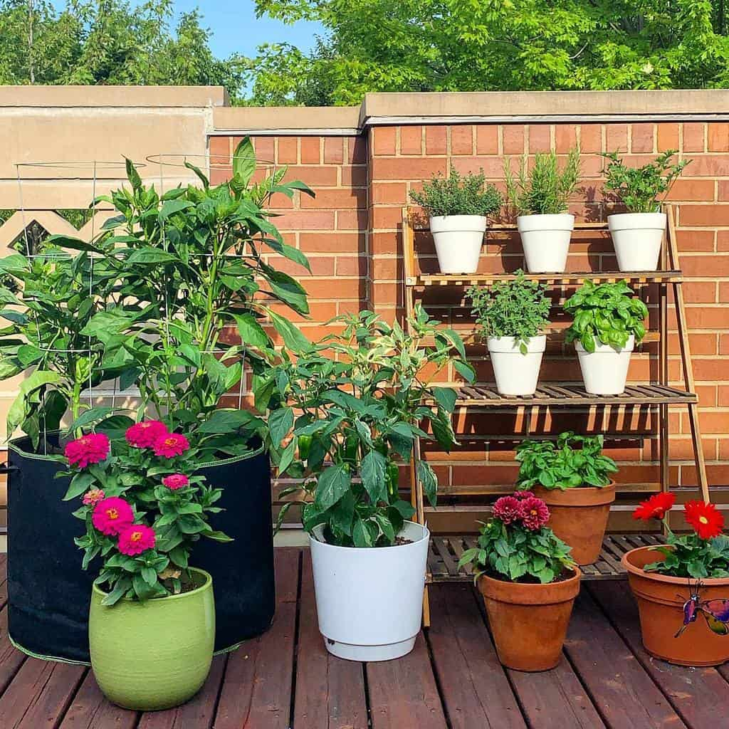 balcony rooftop herb garden ideas chicagogardener