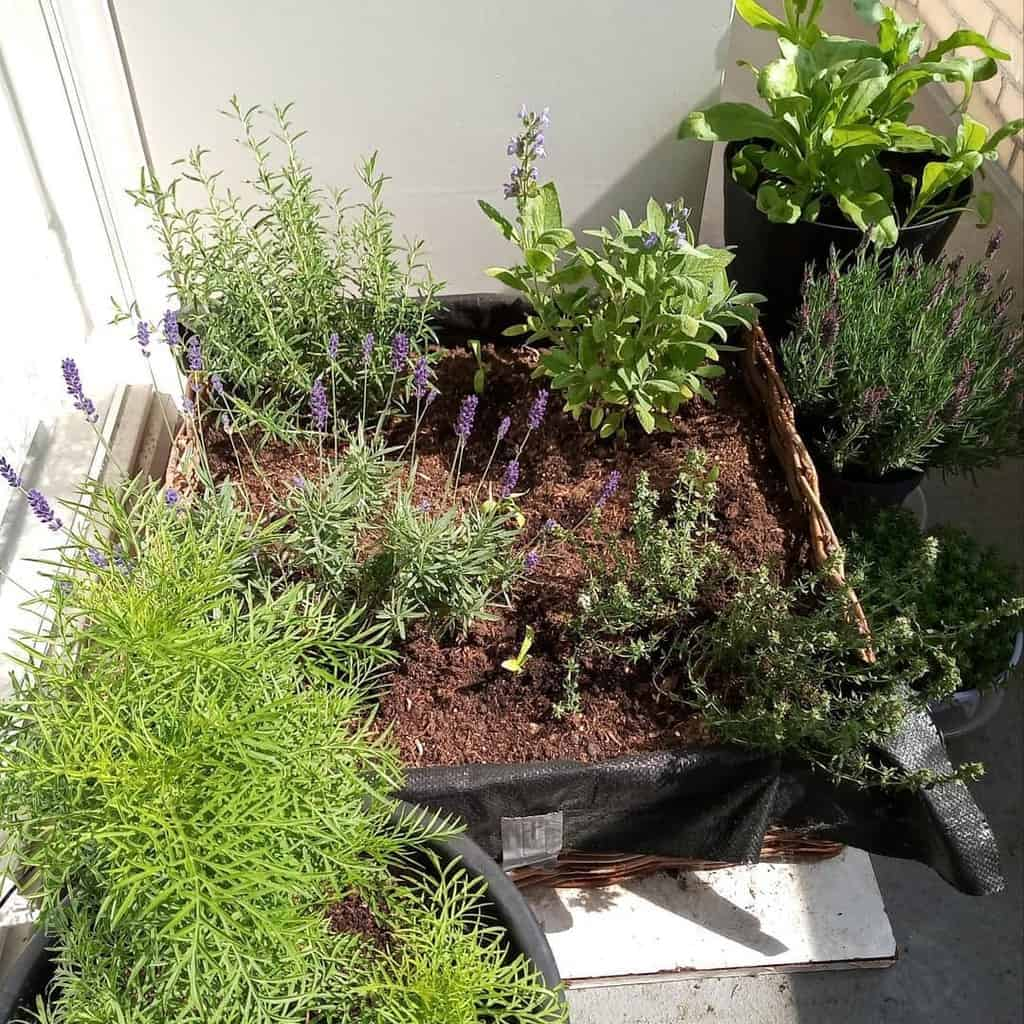 balcony rooftop herb garden ideas grounded_magic