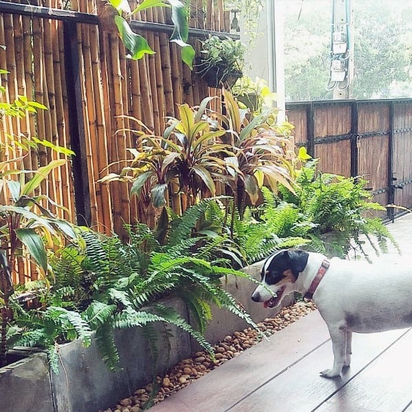 Bamboo Fence Design Inspiration